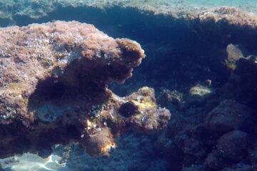 Fondali rocciosi, con riccio di mare