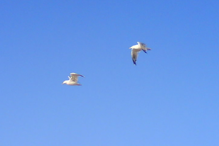 Flying seagulls - about Sardinia 4 Emotions