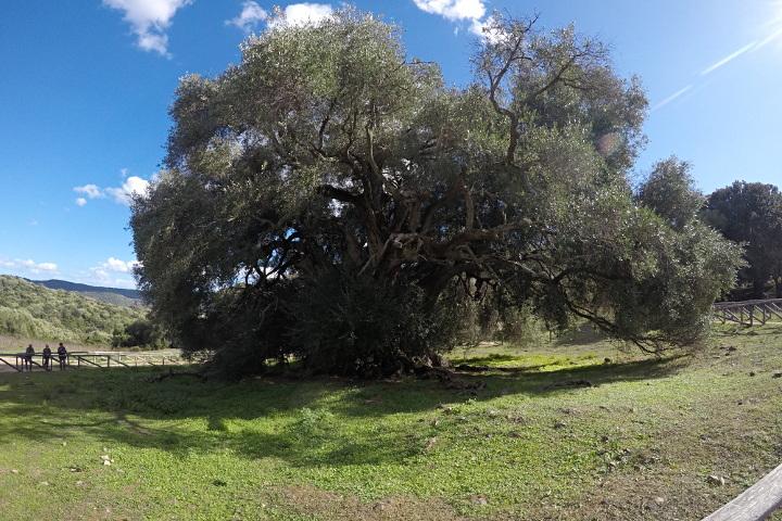 Vue sur l'olivier
