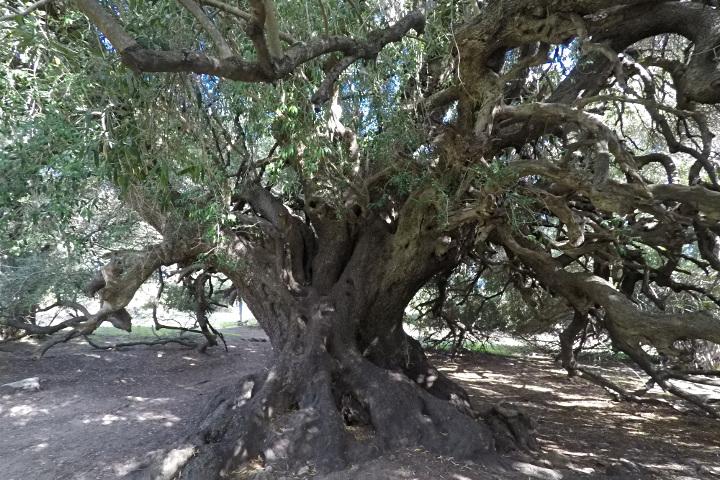 Near the tree